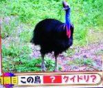 トリニクって何の肉!?を振り返る オーストラリアの奇妙な動物