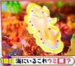 トリニクって何の肉!?を振り返る 海の変な生き物