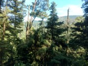 Vista desde Antojitos Chonita, Bosque del Desierto de los Leones
