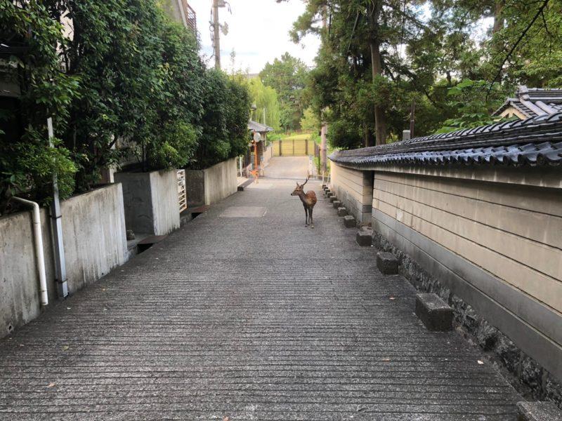 ばったり鹿と出会うのも奈良の楽しさ
