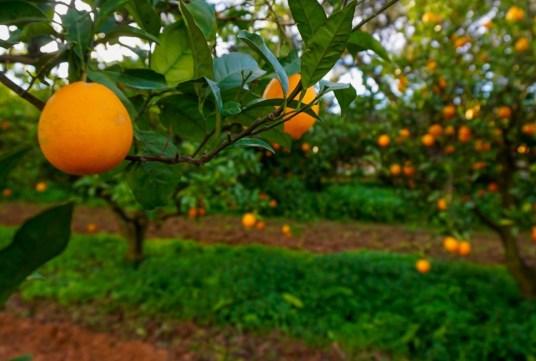 Nuestra apuesta por la Agricultura Ecológica