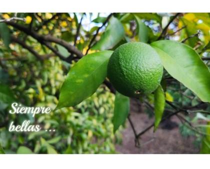 Sigue madurando la naranja
