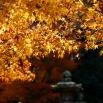 燦めく奈良公園