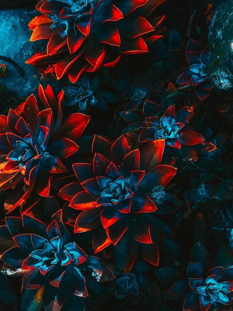 blue and red plants, slachtoffer van een narcistische misbruiker