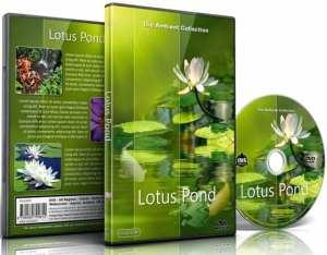 foto cover van lotusvijver DVd