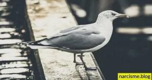 positiviteit geduld en actie, cover foto voor narcisme.blog