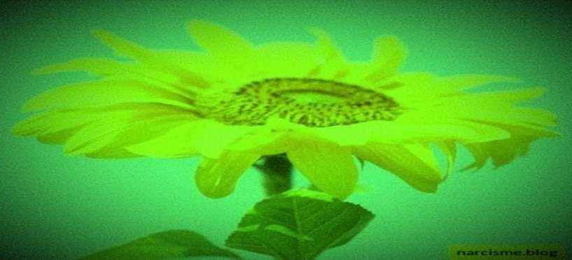 Hoe een bloeiend leven hebben na narcistisch misbruik?