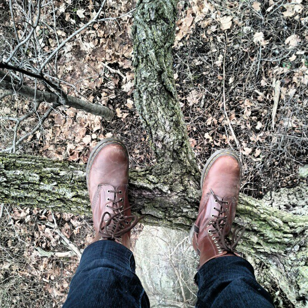 a photo of laurel green's brown boots standing on a tree branch