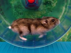 hamster in a wheel--the narcissist relationship