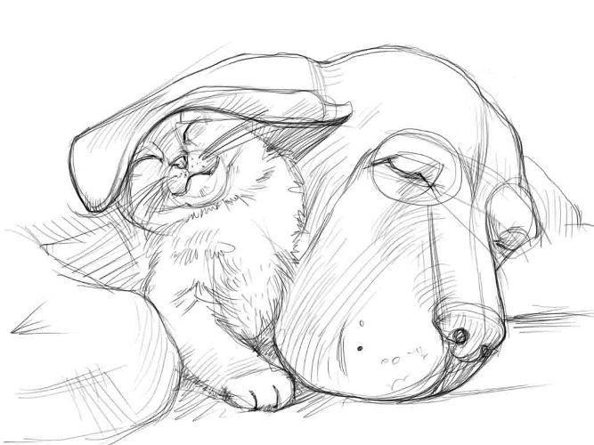 Картинки карандашом кошки собаки
