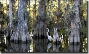 Everglades_National_Park01