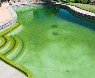 Tips dan Cara Menghilangkan Alga di Kolam Renang 1