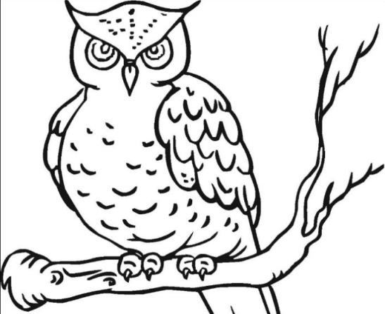 Contoh Sketsa Gambar Burung 5 Tips Mewarnai Yang Efektif