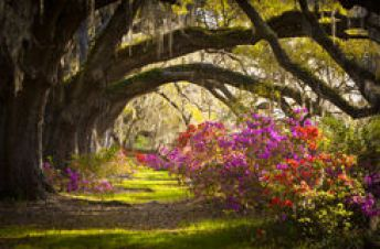 http://www.dreamstime.com/stock-images-charleston-sc-plantation-flowers-oak-trees-moss-image24107054