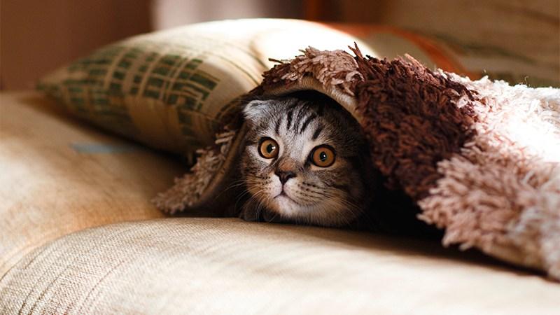 Un chat tapi sous une couverture se demande quels secrets renferment le paragraphe