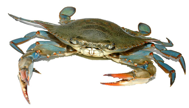 blue crab narrow river preservation association
