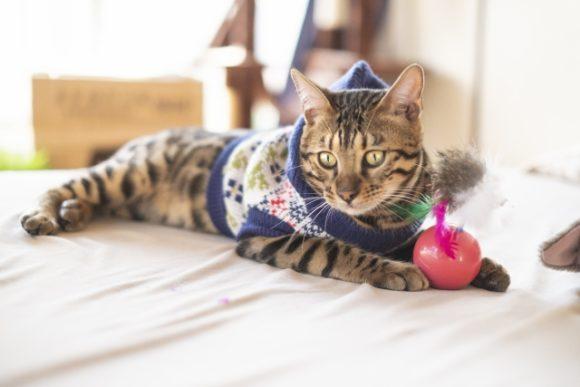 服を着せられた猫