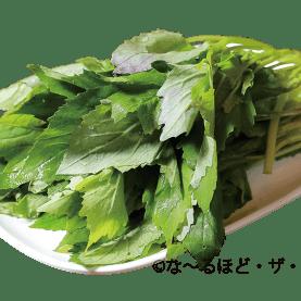 昭和草(ベニバナボロギク)