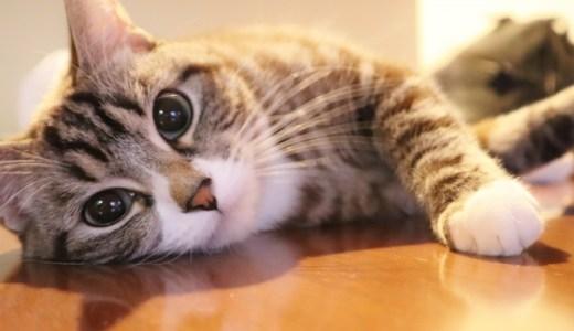 愛猫を猫コロナウイルス感染から守るには消毒が有効!食器やトイレを手軽に衛生管理するには?