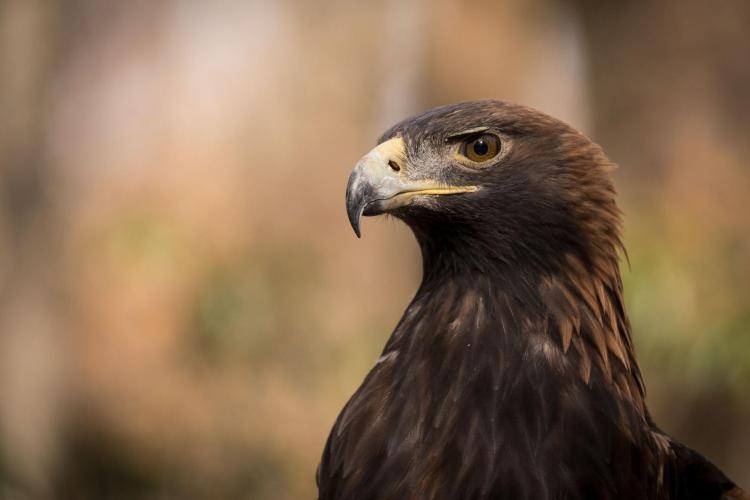 Audubon Joins Coalition to Sue Trump Administration Over Harmful NEPA Rules