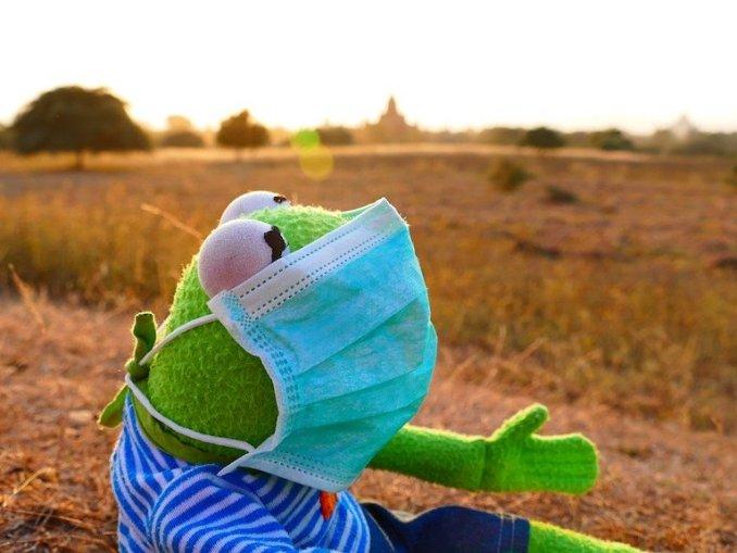 Kermit der Frosch mit mundschutz