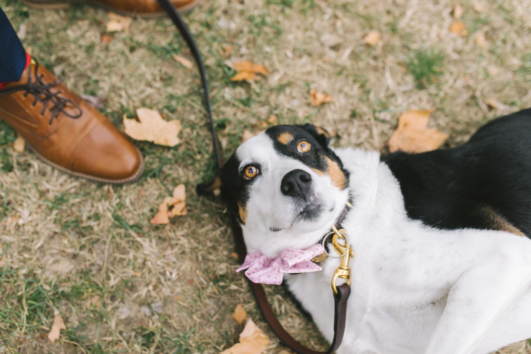 Dog laying down at wedding   Nashville Bride Guide