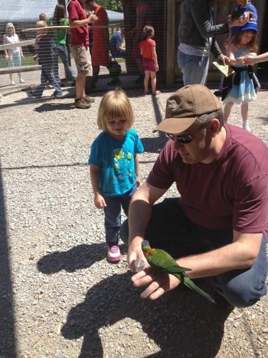 Nashville fun for families - Kentucky down under - feeding lorikeets