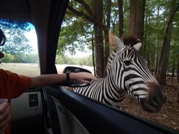 Harmony Safari Park - Drive Thru 2