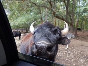 Harmony Safari Park - Drive Thru 3
