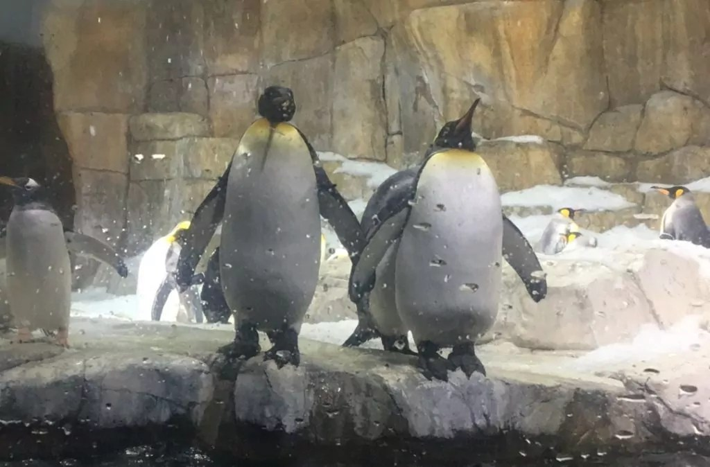 In Awe of the Black Hills - Penguins at the Henry Doorly Zoo