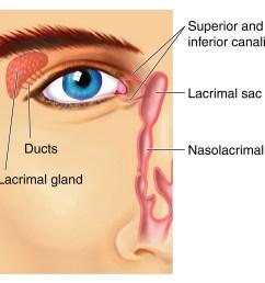eye and nose diagram wiring diagrams dog nose diagram diagram of eye and nose [ 2352 x 1971 Pixel ]