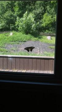 chillin' on my window screen