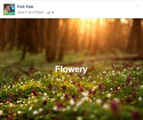 Facebook Background Posts flower