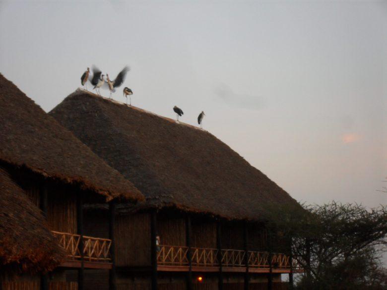 Kenya 2011 139