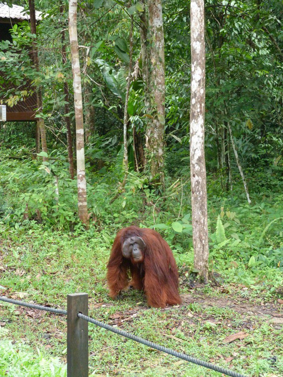 Borneo Gezi Rehberi