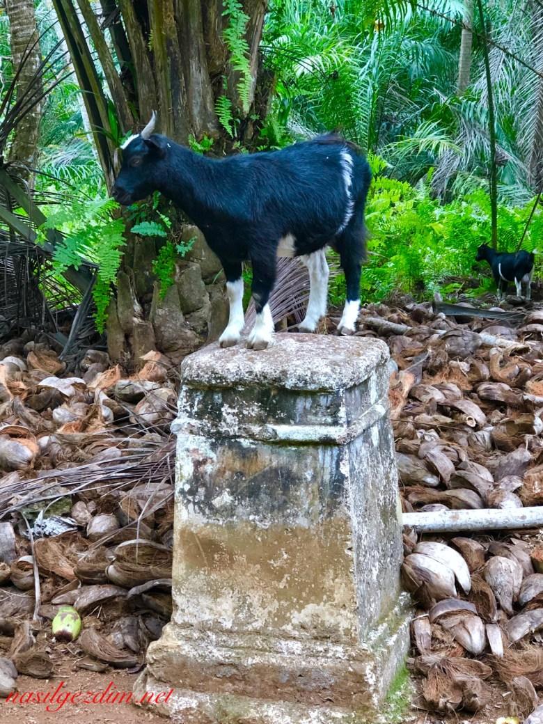 Sao Tome ve Principe Gezilecek Yerler. Sao Tome ve Principe Gezi Rehberi, Rolas Adasi,ilheu das rolas, nasil gezdim, nasilgezdim,Ekvator Dünyanin ortasi,.jpeg