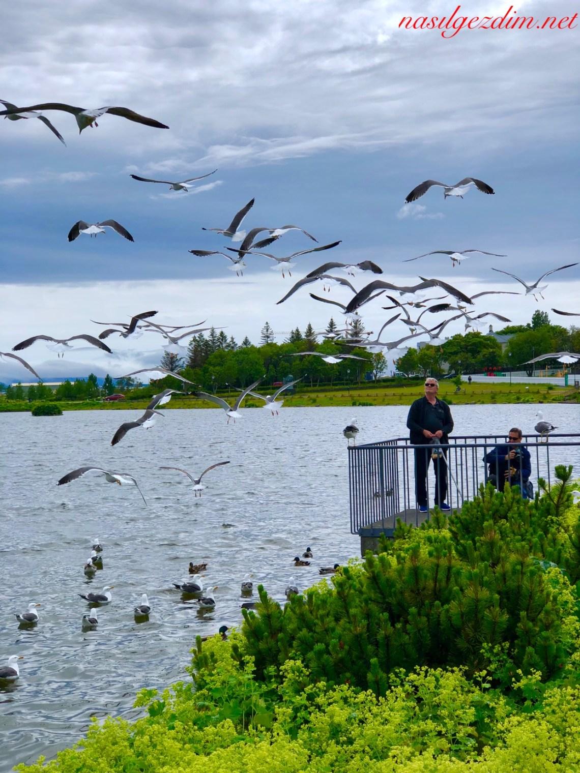 izlanda gezi rehberi, izlanda gezilecek yerler, nasil gezdim, nasilgezdim, güney izlanda gezilecek yerler, reykjavik gezi rehberi, iskandinavya gezilecek yerler, reykjavik gezilecek yerler, izlanda, kuzey ışıkları