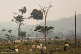 deforestation in the Congo