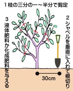 nasu-kosinsentei1