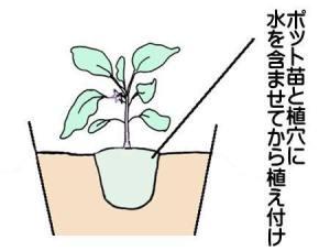 nasu-uetuke (3)