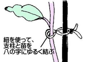 yuwaku (2)