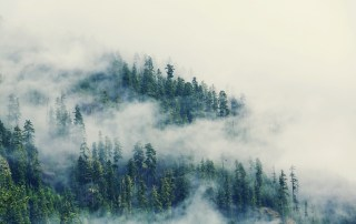 fog-in-the-forest