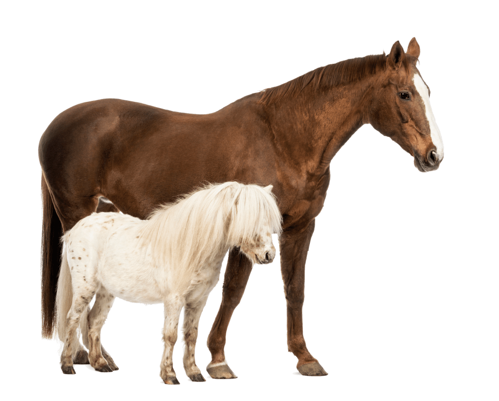 happy horse healthy planet big and small