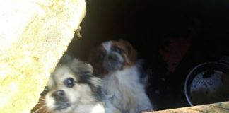 Psy trzymał w skandalicznych warunkach: grożą mu dwa lata więzienia