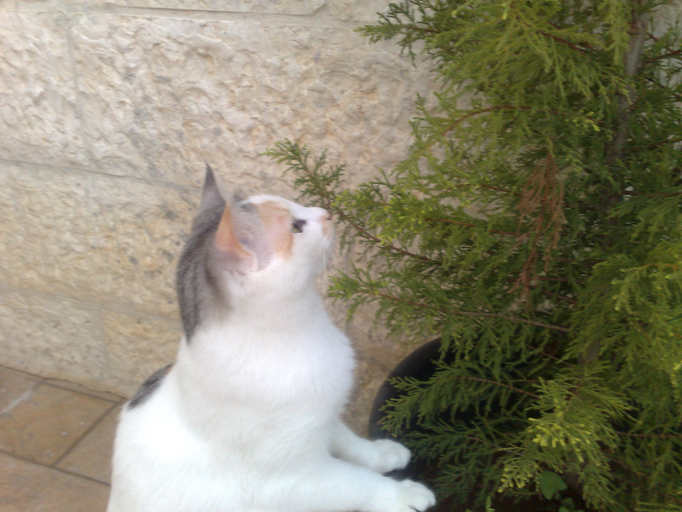 the time for tasting tasty evergreens