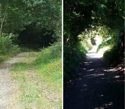 Dos senderos, uno hacia una boca oscura, otro camino hacia la luz. El entorno está lleno de vegetación