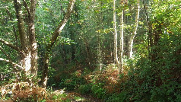 En un sendero custodiado por altos árboles se filtra la luz del día