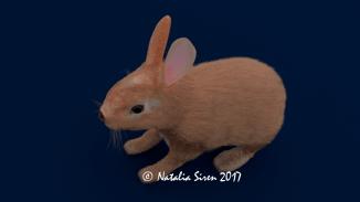 Realistic Hare R_1