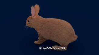 Realistic Hare R_4