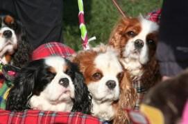 The Great British Dog Walk Edinburgh